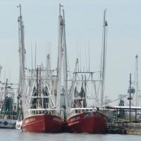 Fishing fleet in Venice LA