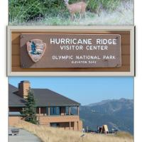Visiting Hurricane Ridge in Olympic National Park