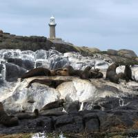 The Australian Fur Seal Colony on Montague Island.