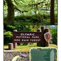 The Hoh Rain Forest of the Olympic National Park.  Check out the infamous banana slug!
