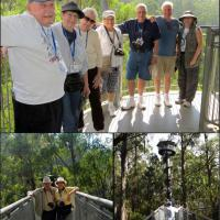 Top:  Don, Peggy, Esther, Marge, Bill, Glen and Leann make it to the top of the Spiral Tower of the Otway Fly Treetop Walk. Bottom left:  Bill and Judy experience the cantilever walkway over 82 feet above the forest floor.  Bottom right:  As we made our way to the tower we could feel the walkway swaying gently in the tree canopy.