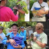 Top left:  Keeper James holds a Koala for Wanda to pet, top right:  Bill with the joey Kangaroo who hasn't been named yet, bottom left:  Betty holds Tracey the Swamp Wallaby, bottom right:  Marge and the Ringtail Possum get acquainted