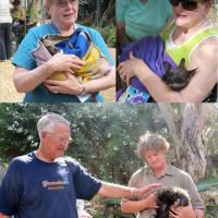 Top left:  Anita's joey is in good hands, top right:  Candace holds little Tracey, bottom:  Stan checks out the spiny Echidna, one of the rarest animals in the world.