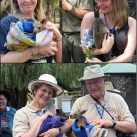 Top left:  The joey Kangaroo is comfortable in the arms of Mary Lee, top right:  Cassandra tries to rein in the wiggly Ringtail Possum, bottom:  Judy and Bill enjoy their joeys.