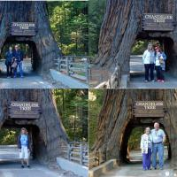 A fun, non lighthouse stop was at the drive through Chandelier tree.