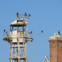 The tower at Four Mile Crib is a perfect landing perch waiting for the next school of fish