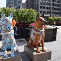 200 decorated police dogs line Michigan Ave.