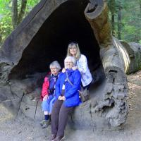 Mary Lee , Dianne and Darlene pose inside one of the large trees.