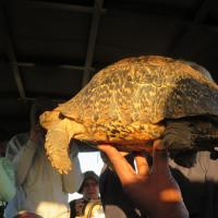 Tortoise in the Hand
