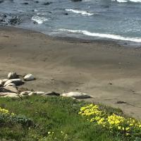 Sea Lions making a home on the beach south of Piedras Plancas Lightouse