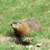 Ground hogs keep guard over Queen's Wharf