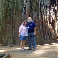 Dave & Sue pose in front of the National Champion Coast Redwood.