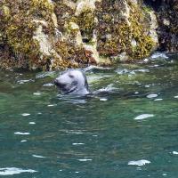 Caldey Island resident.