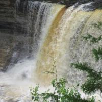 The water at Tahquamenon Falls is notably brown in color from the tannins leached from the cedar swamps which the river drains. The upper falls are more than 200 feet across and with a drop of approximately 48 feet.