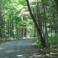 Presqu'ile Provincial State Park provided a forest to shoreline ride