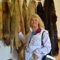 Charlene smooths the various pelts to determine which one she liked best.