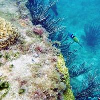 Underwater Photo 2