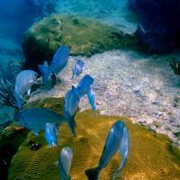 Underwater Photo 3
