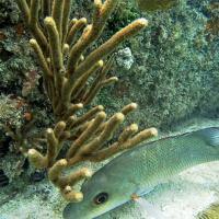Underwater Photo 4
