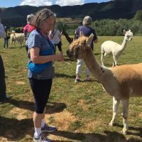 Teri feeding an Alpaca