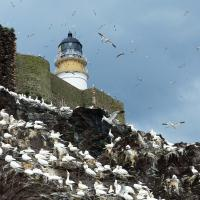 Never saw so many birds.  Like an old Hitchcock movie.  20,000 gannets!