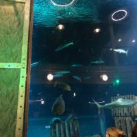 Cargo Hold - Farewell dinner with the sharks