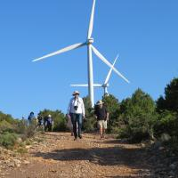 Group with the wind generators