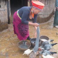 Shakaland kitchen